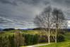Birkenbäume, bei Willisau (Hanspeter Ryser) Tags: birke baum landschaft willisau pilatus grün hergiswil wald schweiz switzerland centralschweiz gras