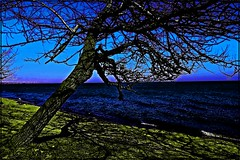 Stay The Night - HSS (Daryll90ca) Tags: video staythenight hss sliderssunday tree lake lakeerie shadow