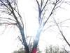 IMG_0846.jpg (xposed59405) Tags: miadupark trees directlight 160secatf80 45mm iso80 roseville outdoors sun