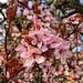 Clustered Blossom
