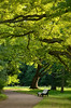 Дождалась (Tutchka) Tags: ветки дерево деревья лето ломоносов любовь ожидание ораниенбаум парк прогулки разное скамейка солнце