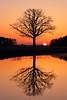 IMG_8335 (geraldtourniaire) Tags: sonnenaufgang natur nature franken 24105l eos6d 6d landschaft licht l baum