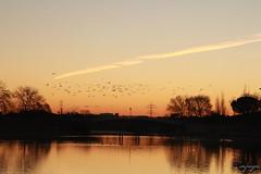 stay free...libre al fin (cienfuegos84) Tags: aves ave bird birds golden dorado naranja orange water