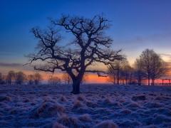 the last frost (ibjfoto) Tags: danmark denmark dyrehaven forest ibjensen ibjfoto natur sealand sjælland woodland skov trees træer