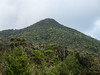 伊部岳, Mt. Ibudake, Japanese subtropical mountain (yuyugreen) Tags: 日本 沖縄 亜熱帯 森林 植物 japan okinawa subtropical plant forest