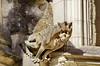 1350 Val de Loire en Août 2017 - Tours, le cloître de la Cathédrale (paspog) Tags: tours france valdeloire cathédrale cathedral kathedral 2017 gargouille gargouilles gargoyles gargoyle