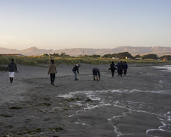 DSC08568 (GusTheArtist) Tags: yescoast scrp sonomacounty regionalparks pacificcoast doran doranbeach ocean beach