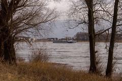 Baumberg am Rhein (KL57Foto) Tags: 2018 baumberg fluss germany gewässer jahreszeitenundwetter kl57foto landschaften march monheimbaumberg märz nrw natur nordrheinwestfalen olympus penemp2 rhein rhine river winter
