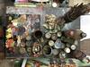 rickshaw painter Samsu's paints and brushes (olive witch) Tags: abeerhoque bangladesh bd dhaka feb18 february funny indoors