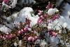 IMG_6889 (Usagi93190) Tags: macro flower biltmore estates greenhouse gardens ashville north carolina