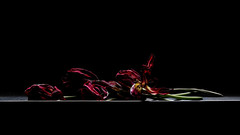 I caught the darkness (macplatti) Tags: xt2 xf55200mmf3548rlmois koblach vorarlberg austria aut darkness cohen tulips tulpen rot red flora flowers bluemn frühling springtime blood blutrot düster dunkelheit availablelight licht light black schwarz kunst bild tableau wabisabi
