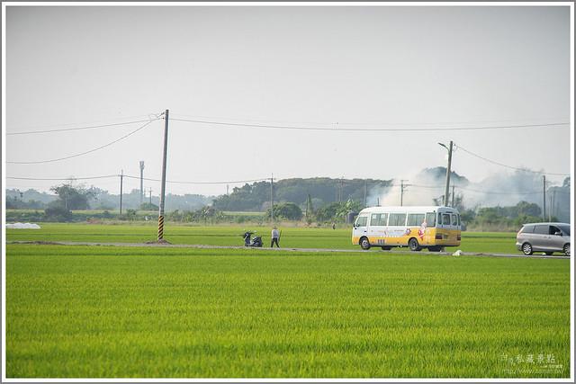 將軍埤 含苞待放南洋櫻 (40)