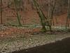 Spring Snow Flakes (aniko e) Tags: amaryllidaceae leucojum leucojumvernum tőzike tavaszitőzike springsnowflake snowflake märzenbecher knotenblume frühlingsknotenblume maising maisingerschlucht starnberg starnbergersee schlucht gorge creek maisingerbach bach spring flower white hiking