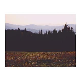 gloomy landscapes