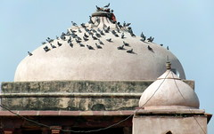 abhaneri pigeons (kexi) Tags: abhaneri rajasthan india asia birds pigeons many temple dome domes old ancient samsung wb690 february 2017 sky architecture instantfave wallpaper dissymmetry harshshatmatatemple