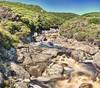 Tasman river after 70mm of rain the previous 2 days. (taszee63) Tags: tasmania panorama hdr 3xp tasman river timelapse rv westcoast rock water green bush stream sky trees