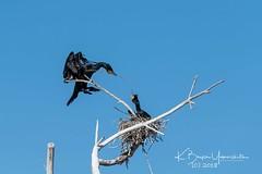 (bryce yamashita) Tags: belmar belmarpark colorado d850 lakewood nature nikon wildlife yamashita