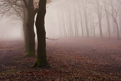 Lost (peeteninge) Tags: forest trees wood nature winter misty mist fog foggy bos bomen natuur fujifilmxt2 fujifilm