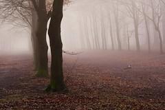 Lost (peeteninge) Tags: forest trees wood nature winter misty mist fog foggy bos bomen natuur fujifilmxt2 fujifilm xf80mmf28