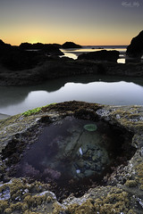One of my favorite tide pools (Masako Metz) Tags: tidepool beach ocean sea water sunset evening nature seaanemone seaweed coral rocks clear sky orange oregon coast pacific northwest usa america coastal coastline shore shoreline aquarium favorite