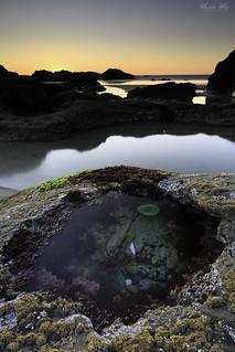 One of my favorite tide pools