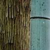 proximity (szélléva) Tags: japan kyoto nippon bamboo bamboogrove abstract texture minimalism minimalart tree nature