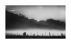 Oh ! La Vache (gwennscott) Tags: cow mountain mist blackwhite monochrome