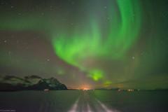 Amazing northern lights (claudiacalice) Tags: nature lofoten norway northernlights amazingnature outdoor winter lights night nightsky