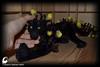 Enchanted black Panther (Professional Art Doll Maker) Tags: artdolls art arttoy arttoyanimals panther fantasy fantasydollszlata fantasyforest fauxtaxidermy fantasyart blackpanther blackcat blackcatartdoll blackcatdolls gothic gothicdoll gothicforest gothicart gothicdolls gothicgifts gothiccat softsculpture sculpture