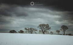 Lined Up (RTA Photography) Tags: snow winter spring2018 sky nature landscape clouds shadows minimalist trees colds nikon d750 light