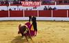 _DSC9040 (chris30300) Tags: aignan occitanie france toros corrida matador