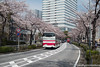 (takafumionodera) Tags: cherryblossomes japan minatomirai pentax q7 road yokohama みなとみらい 桜 横浜 道