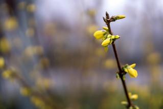 Mellow yellow...