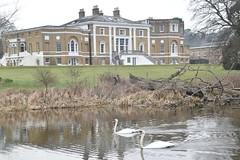 Waverley Abbey House (PLawston) Tags: uk britain england surrey waverley abbey house swans mute