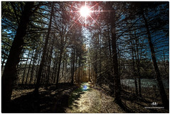 MARCH 2018 NGM_7508_4150-1-222 (Nick and Karen Munroe) Tags: munroedesigns munroe photography munroephotoghrpahy landscape ontario outdoors canada nickmunroe nickandkarenmunroe nick munroedesignsphotography munroephotography munroenick karen landscapes ontariocanada beauty brilliant heartlakeconservationarea heartlakeconservation heartlakepark heartlake conservationarea conservation sunlight sunburst sun sunshine starburst colour colours color colors spring karenandnick karenmunroe brampton bramptonontario nikon nickandkaren karenick23 karenick karenandnickmunroe nature d750 nikond750 nikon1424f28 1424 1424f28