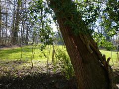 Split in tree (joeke pieters) Tags: 1380637 panasonicdmcfz150 woold winterswijk achterhoek gelderland nederland netherlands holland boom tree spleet gespleten split landschap landscape landschaft paysage