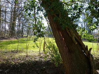 Split in tree