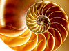 "Nº262 !!! SPIRAL LOGARITMICA CONCHA NAUTILUS. !!! (Jordi Camardons Caralt) Tags: nautylius concha patronorganico fibonacci nautilus shell espiral closeup ""patron organico"""