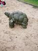 Die Schildkröte. / 14.04.2018 (ben.kaden) Tags: berlin weisensee ottobrahmstrase kunstderddr kunstimstadtraum spielplatz schildkröte wenigrot wenigblau 2018 14042018