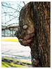 Hmpf! (Silke Klimesch) Tags: 7dwf macroorcloseup tree baum pareidolia arbre albero arbore árbol árvore drzewo δέντρο дерево 树 face gesicht visage viso față cara πρόσωπο лицо́ grumpy cantankerous sullen illhumored übellaunig désaccordé dimalumore berlin schlosscharlottenburg charlottenburgcastle panasonic lumixlx100 lumix leica leicadcvariosummilux palaciodecharlottenburg castellodicharlottenburg castelulcharlottenburg pałaccharlottenburg charlottenburgsarayı deutschland germany mft on1photoraw2018 makemesmile bokeh spring humpday hump grantler curmudgeon dergrüffelo thegruffalo