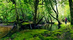 Pine Valley Track, Lake St Clair National Park (tastrails) Tags: tasmania tastrails pine valley lakestclair overland hiking cradlemountain tasmanian tasmanianbushwalking tas acropolis geryon labyrinth