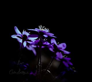 Spring illuminated