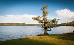 Lone Tree (Paul K Martin) Tags: goldenhour evening landscape water lake uk ambleside lakedistrict windermere lonetree 1200sec f90 nikon18200mm nikond300s