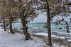 Cold Wind from the Lake (gabi-h) Tags: lakeontario cedars trees snow beach northbeach waves water gabih princeedwardcounty march wind chilly rocks