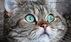 KENT (aika217) Tags: canon eos 77d efs18135mm f3556 is usm cat tabby whiskers eyes pet