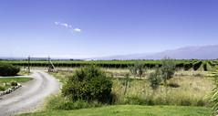 Mendoza, Argentina (Mariana Dussel) Tags: mendoza paisaje viñedos naturaleza landscape argentina montañas
