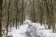 Neverending Winter (Photography by Martijn Aalbers) Tags: winter march maart bos spakenburgsebos forest cold koud freezing vriezen snow sneeuw path pad trail spoor vision visie nature natuur weather weer canoneos77d ef70200mmf4lisusm wwwgevoeligeplatennl