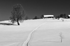 shadows of the spring (Sergey S Ponomarev) Tags: sergeysponomarev canon eos 70d ef24105mmf4lisusm nature natura spring winter blackandwhite monochrome landscape paysage paesaggio landschaft march marzo village rural country russia russie north nord neve snow trees buildings path 2018 shadows contrast europe сергейпономарев природа деревня россия киров вятка март весна зима снег монохром чернобелый пейзаж деревья изба дома дорожка холод мороз север тени kirov viatka vyatka wjatka