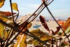_MG_1855 (loubacksurf) Tags: folhas vegetaçaõ galhos praia surfista areia mar predios