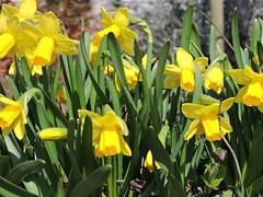 DSCN2725 (keepps) Tags: switzerland suisse schweiz spring vaud luins